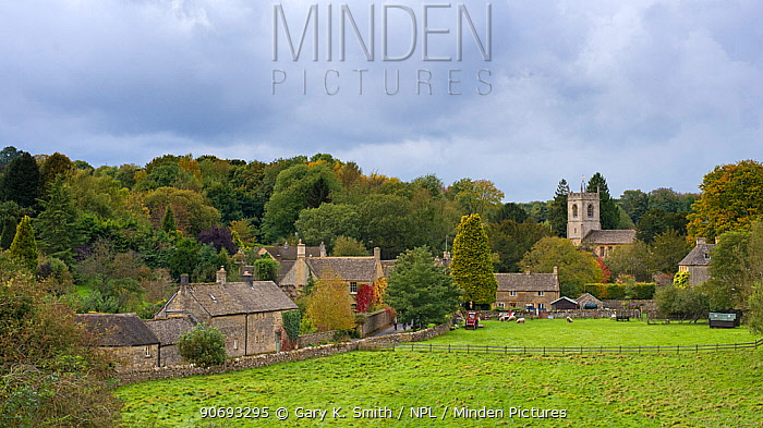View of the village Naunton, showing the village church of St Andrew's, Cotswolds, Gloucestershire, UK, October 2012  -  Gary K. Smith/ npl