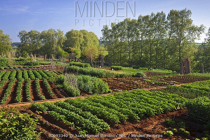 Vegetable plots in Gallecs area, Barcelona Province, Spain, April  -  Juan Manuel Borrero/ npl