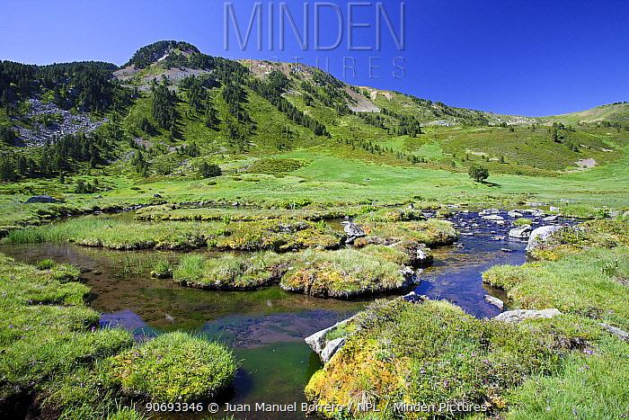 Clots de Rialba, Alt Pirineu Natural Park, High Pyrenees, Lleida Province, Spain, July  -  Juan Manuel Borrero/ npl
