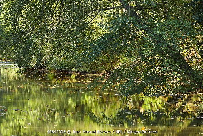 Tree reflected in Fluvia River, Pyrenees, Girona Province, Spain  -  Juan Manuel Borrero/ npl