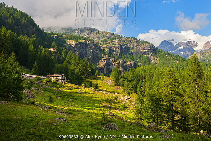 Abandoned farm buildings in mountain landscape, Aosta Valley, Monte Rosa Massif, Pennine Alps, Italy July 2012  -  Alex Hyde/ npl