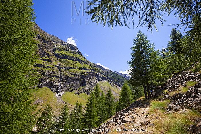 Vallone di Valelle, Gran Paradiso National Park, Aosta Valley, Pennine Alps, Italy July  -  Alex Hyde/ npl