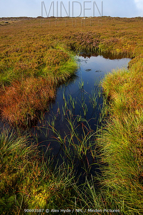 A moorland pond on Derwent Edge, Peak District National Park, Derbyshire, UK September  -  Alex Hyde/ npl