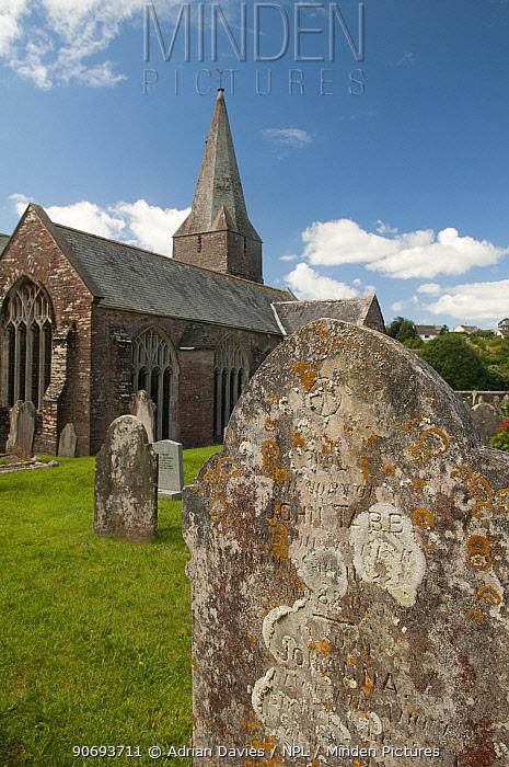 Lichen encrusted gravestone in churchyard, Slapton, Devon, England, UK, July  -  Adrian Davies/ npl