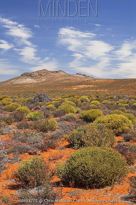 Landscape of succulent karoo, veldt habitat Near Springbok, Namaqualand, South Africa, October 2012  -  Chris Mattison/ npl