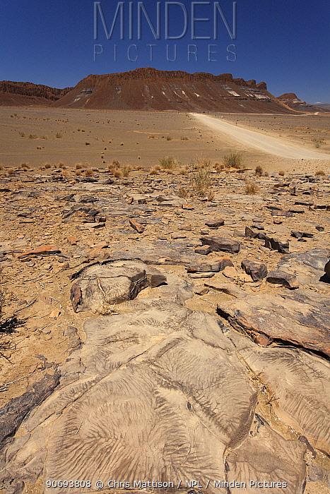 Weathered rocks near Aussenkehr, southern Namibia, October 2012  -  Chris Mattison/ npl