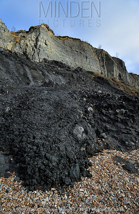 Black Ven landslide on beach between Lyme Regis and Charmouth along the Jurassic Coast, Dorset, UK  -  Philippe Clement/ npl