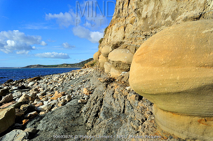Rounded nodules on the beach near Osmington Mills, made of calcite-cemented sandstone from the Bencliff Grit Formation along the World Heritage Site Jurassic Coast, Dorset, UK, November 2012  -  Philippe Clement/ npl