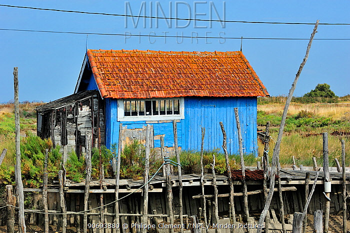 Colourful cabin at oyster farm at La Baudissiere near Dolus, on the island Ile d'Oleron, Charente-Maritime, France, September 2012  -  Philippe Clement/ npl