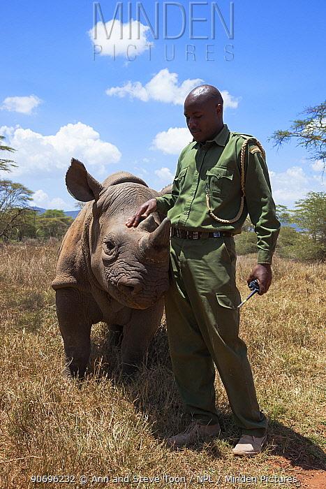 Black rhinoceros (Diceros bicornis) orphaned calf with security officer John Tanui at Lewa Wildlife Conservancy, Laikipia, Kenya, Africa, September 2012  -  Ann & Steve Toon/ npl