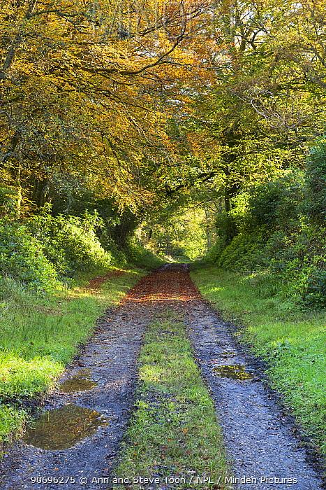 Woodland walk in autumn colours, Bridgend Woods, Islay, Scotland, October  -  Ann & Steve Toon/ npl