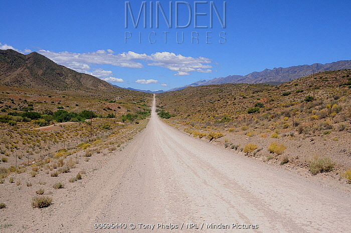 The road from Lainsburg to Calitzdorp, Little Karoo, Western Cape, South Africa, November  -  Tony Phelps/ npl