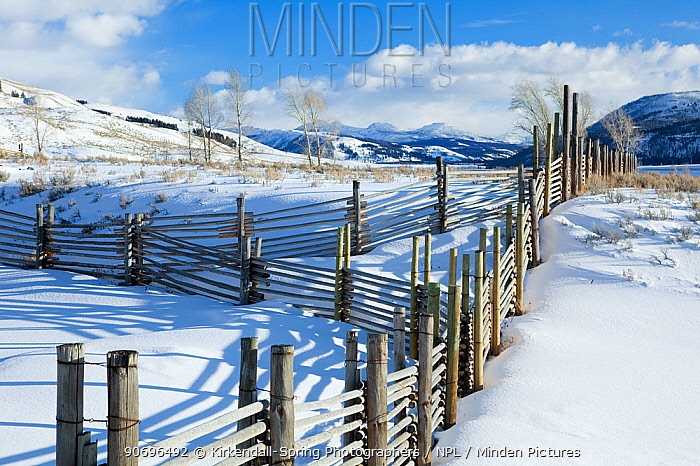 Fence line, Buffalo Ranch, Lamar Valley of Yellowstone National Park Wyoming, USA, January 2012  -  Kirkendall-spring/ npl