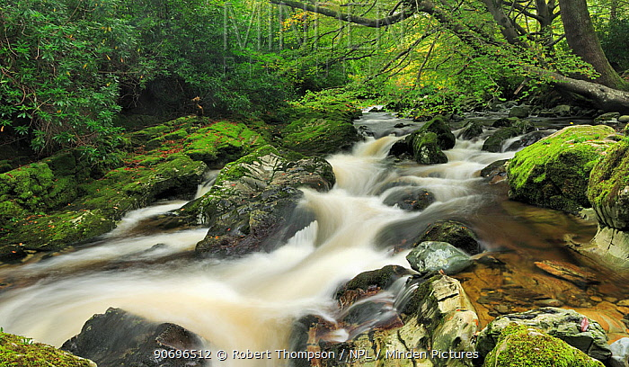 River Shimna, Tollymore Forest Park, Newcastle County Down, Ireland, October 2012  -  Robert Thompson/ npl