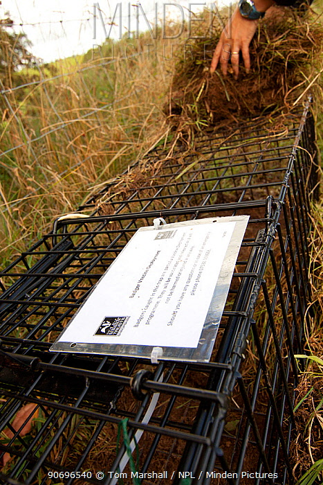Badger (Meles meles) bovine tuberculosis vaccination deployment Staff from Cheshire Wildlife Trust, UK, prepare live traps for vaccination, including bedding in with vegetation along natural badger 'runs' Notes on the cage inform anyone coming across the trap of the programme and not to tamper with equipment Cheshire, Shropshire border, UK, September 2012  -  Tom Marshall/ npl