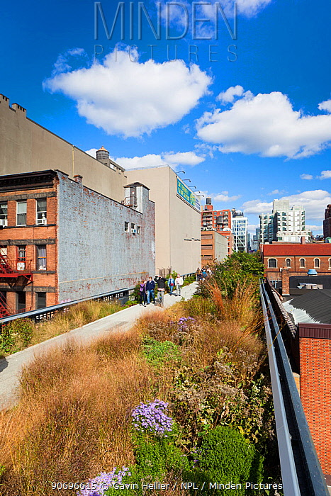 People walking on the High Line, a mile long New York City park on a section of former elevated railroad along the Lower West Side, New York, USA 2011  -  Gavin Hellier/ npl
