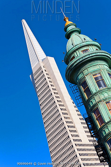 Looking up Trans America Pyramid and Columbus Tower, San Francisco, California, USA 2011  -  Gavin Hellier/ npl