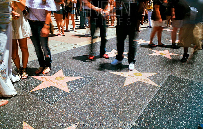 Tourists looking at stars on Walk of Fame, Hollywood Boulevard, Los Angeles, California, USA  -  Gavin Hellier/ npl