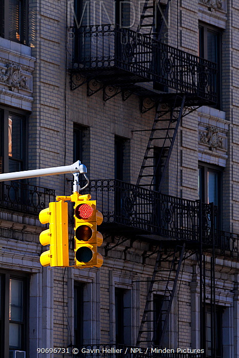 Traffic lights on red and typical buildings in the district of Harlem, New York, USA 2011  -  Gavin Hellier/ npl