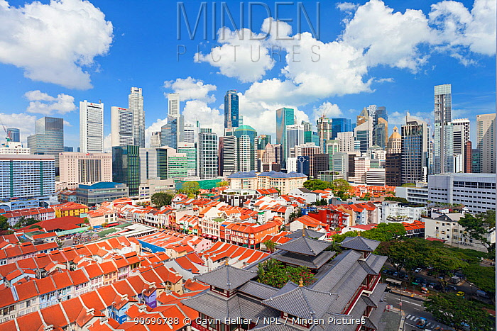 Elevated view over traditional houses in Chinatown, Singapore, 2012 No release available  -  Gavin Hellier/ npl
