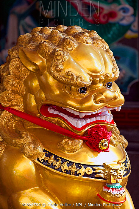 Detail of Chinese Temple lion statue, Chinatown, Singapore, 2012  -  Gavin Hellier/ npl