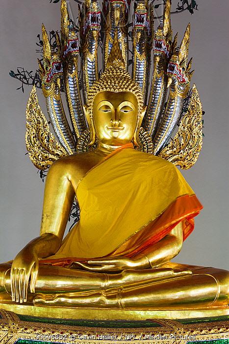Wat Pho, Meditating Buddha Statue, Bangkok, Thailand, 2010  -  Gavin Hellier/ npl