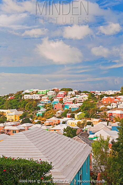 Traditional Bermuda houses with their white stone roofs and colourful walls, Hamilton, Bermuda 2009  -  Gavin Hellier/ npl
