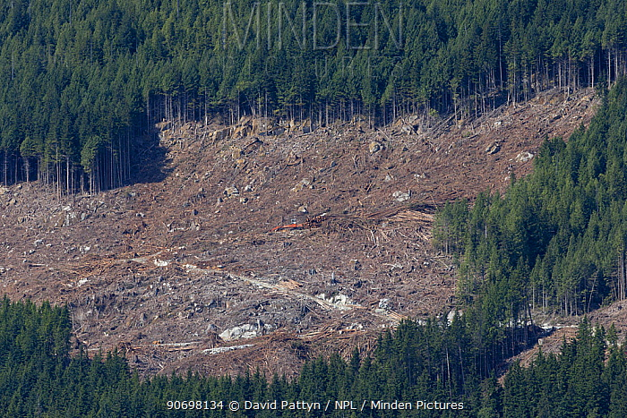 Area of clearcut coniferous forest British Columbia, Canada, August 2013  -  David Pattyn/ npl