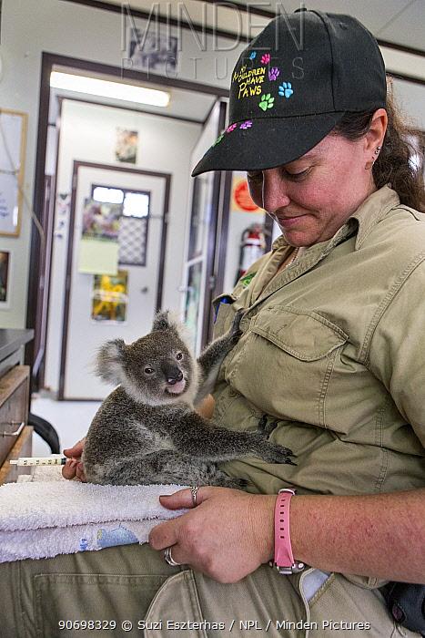 Animal Care Staff holding orphaned Koala (Phascolarctos cinereus) aged ten months, Lone Pine Koala Sanctuary, Australia, captive  -  Suzi Eszterhas/ npl
