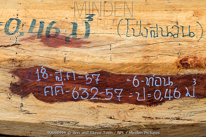 Siam rosewood tree (Dalbergia cochinchinensis) timber confiscated from poachers, marked for evidence, Thap Lan National Park, Dong Phayayen-Khao Yai Forest Complex, eastern Thailand, August  -  Ann & Steve Toon/ npl