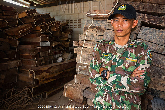 Pang Sida ranger Wisak Thongseekram at evidence store containing Siam rosewood tree (Dalbergia cochinchinensis) confiscated from poachers, Pang Sida National Park, Dong Phayayen-Khao Yai Forest Complex, eastern Thailand, August, 2014  -  Ann & Steve Toon/ npl