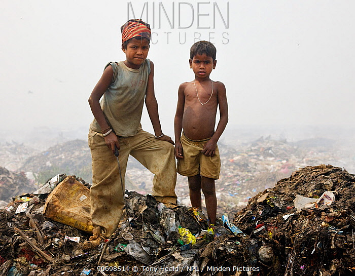Indian rag picker boys standing on rubbish heap in landfill site, Guwahti, Assam, India, March 2009.  -  Tony Heald