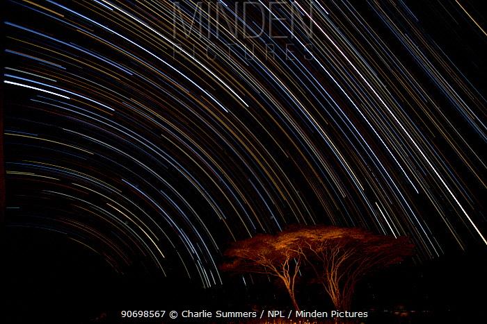 Stars draw traces above Naabi Hill acacia trees, Serengeti National Park, Tanzania