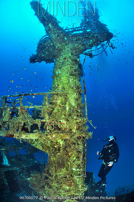 Diver exploring the wreck of the P29 patrol boat scuttled as an artificial dive site in August 2007. Wreck covered in algae and invertebrates and surrounded by fish. Malta, Mediterranean Sea. June 2014.