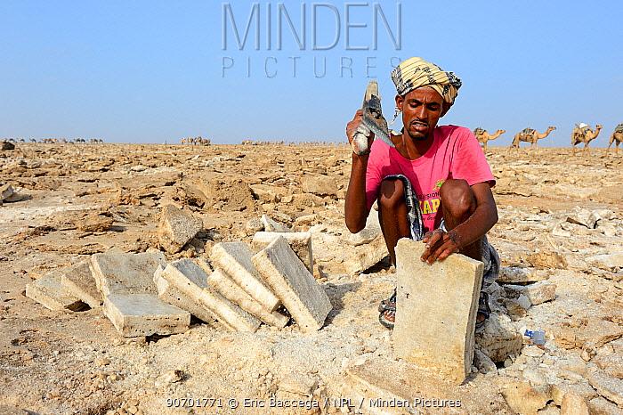 Afar man cutting salt into blocks, Lake Assale, Danakil Depression, Afar region, Ethiopia, March 2015.