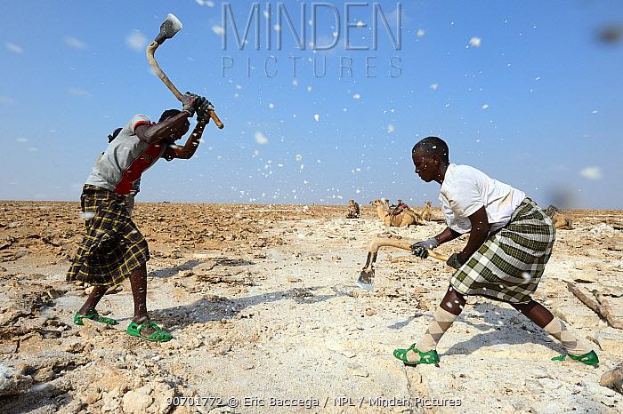 Afar men mining salt at Lake Assale. Danakil depression, Afar region, Ethiopia, March 2015.