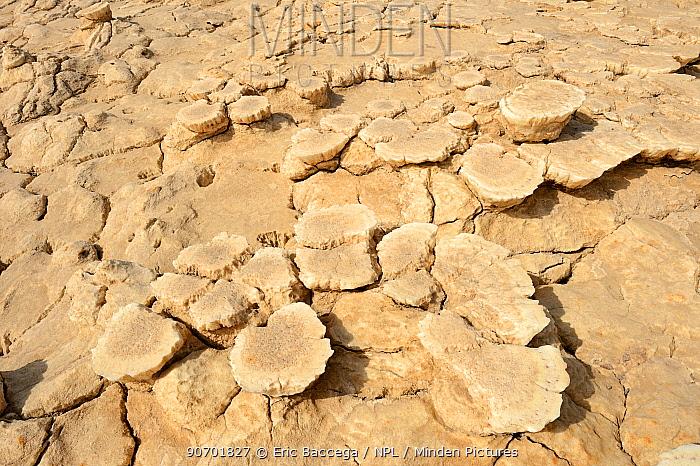Sulphur formation, Dallol Volcano,  Danakil Depression, Ethiopia, March 2015.