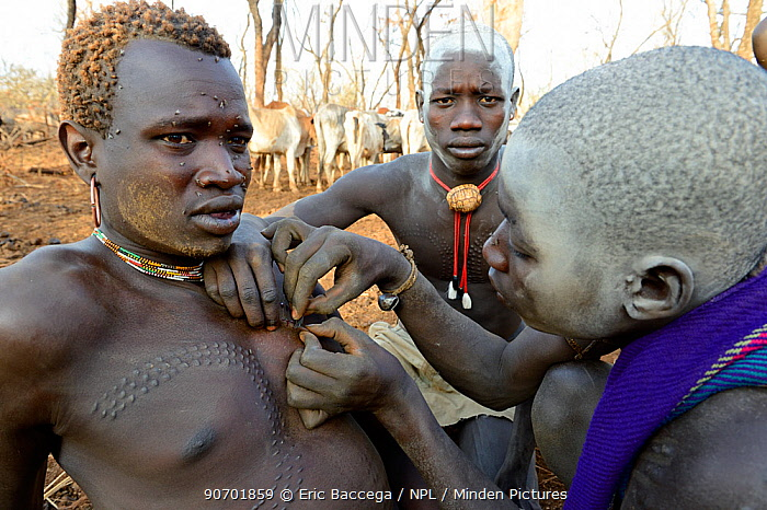 Young man from the Bodi Tribe with having new scars made on his chest with razor blade  to make decorative skin scarifications. Omo Valley,  Ethiopia, March 2015.