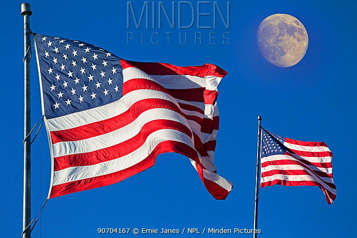Two flags of the United States of America in the wind with the moon in the background. Digital composite.