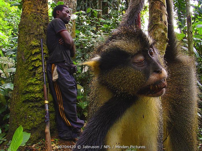 Hunter with gun near Dead Crowned monkey (Cercopithecus mona pogonias) caught for bush meat trade near Mbomo village, Odzala-Kokoua National Park, Republic of Congo, May 2005.