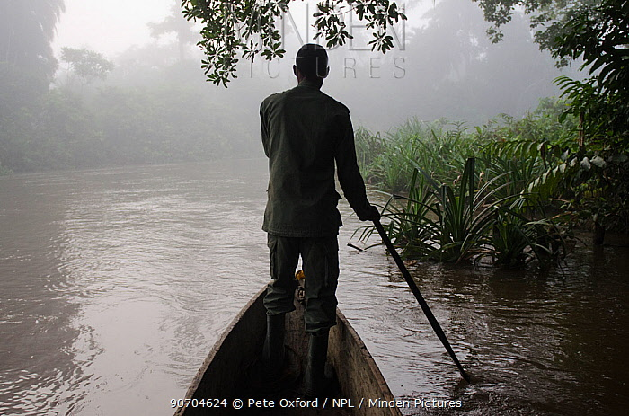 Guide paddling canoe in Lekoli River, Republic of Congo (Congo-Brazzaville), Africa, June 2013. Not available for book covers until 2026