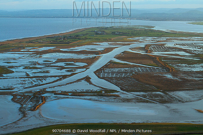 Aerial view of Steart Marshes Wildfowl and Wetland Trust Nature Reserve, agricultural land transformed into wetland reserve, Somerset, UK, February 2015.   This area has been allowed to flood by the WWT and the Environment Agency to create new salt marsh habitat and is an example of managed retreat.