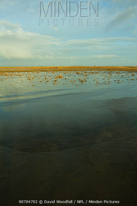 Steart Marshes Wildfowl and Wetland Trust Nature Reserve, agricultural land transformed into wetland reserve, Somerset, UK, February 2015.   This area has been allowed to flood by the WWT and the Environment Agency to create new salt marsh habitat and is an example of managed retreat.