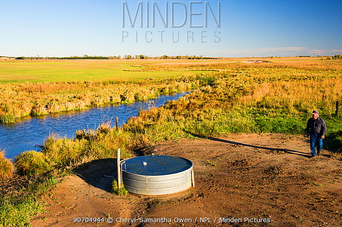 Lynn Ballagh inspecting water well on his cattle ranch in the Sandhills of Nebraska, Garfield County, Nebraska, USA. October 2014.