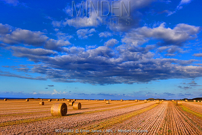 Straw bales and field of stubble, Weybourne, Norfolk, UK August 2014.