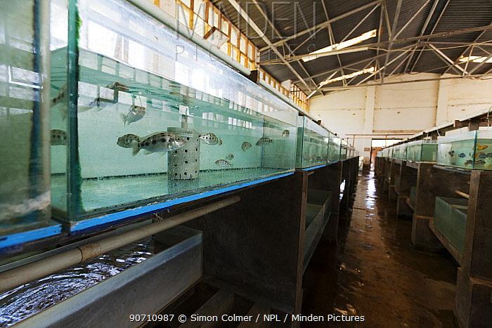 Tanks used for breeding Malawi Cichlid (Pseudocrenilabrinae) fish, Senga Bay, Malawi. November 2012
