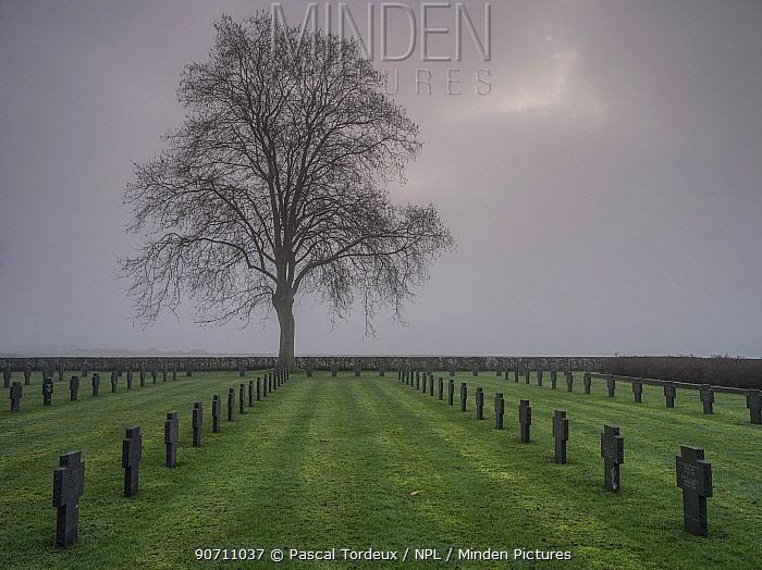 World War One German  cemetery in fog, Chemin Des Dames, France, December 2014.