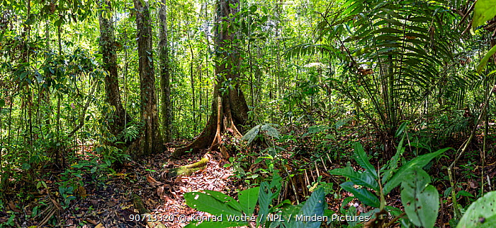 Lowland rainforest, Panguana Reserve, Huanuco province, Amazon basin, Peru.