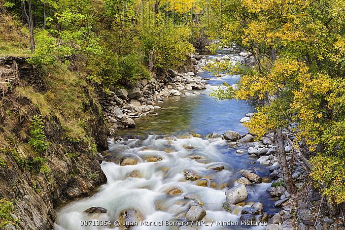 Autumnal trees on the shore of Noguera Pallaresa River in Alt Aneu Natural Park. Aneu Valley. Pyrenees Mountain. Lleida. Catalonia. Spain, October.