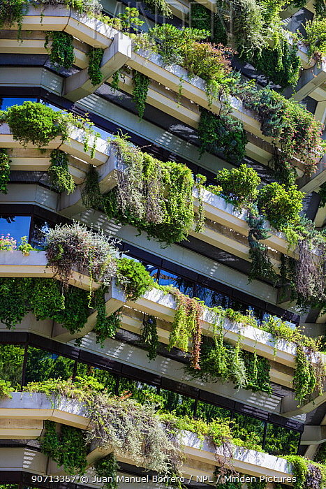 Vertical garden on the walls of a tower block, Barcelona. Catalonia. Spain, June 2013.